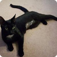 Adopt A Pet :: Gigi - Toledo, OH
