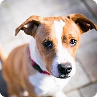 Adopt A Pet :: Jordan (Needs Foster/Has Application) - Washington, DC