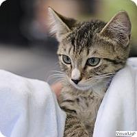 Adopt A Pet :: Peanut - Westchester, CA