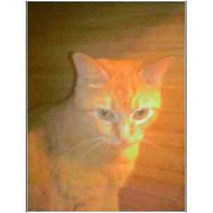 Domestic Shorthair Cat for adoption in Owasso, Oklahoma - Ramona