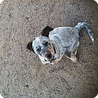 Adopt A Pet :: Johnnie - Phoenix, AZ