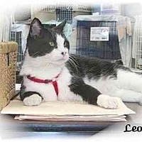 Adopt A Pet :: Leo - Montgomery, IL