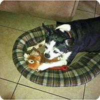 Adopt A Pet :: Ernie - Temecula, CA