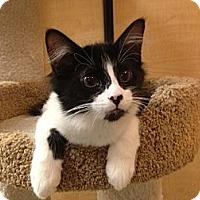 Adopt A Pet :: Hunter - Foothill Ranch, CA