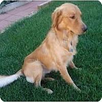 Adopt A Pet :: Zeke - Denver, CO
