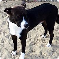 Adopt A Pet :: Johnny - Phelan, CA