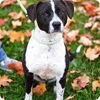 Adopt A Pet :: Jada - Springfield, IL