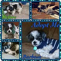 Adopt A Pet :: Barbosa - Cheney, KS