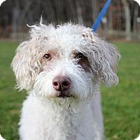Adopt A Pet :: Emmy - Long Beach, NY