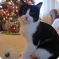 Adopt A Pet :: Little Boy - Eagan, MN