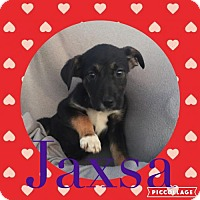 Adopt A Pet :: Jaxsa - Columbia, MD