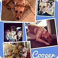 Adopt A Pet :: Cooper - Scottsdale, AZ
