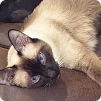 Adopt A Pet :: Katana - Arlington/Ft Worth, TX