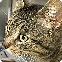 Adopt A Pet :: Reggie - Voorhees, NJ