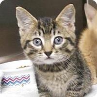 Adopt A Pet :: Boomer - Belleville, MI