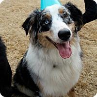 Adopt A Pet :: Legend - Nashville, TN