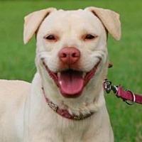 Adopt A Pet :: Nicole - San Ramon, CA