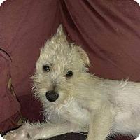 Adopt A Pet :: Lana - Custer, WA