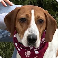 Adopt A Pet :: Emmy - Evansville, IN