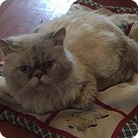 Adopt A Pet :: Sergio - Hampton, VA