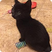 Adopt A Pet :: Rico - Herndon, VA