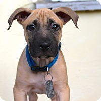 Adopt A Pet :: Dempsey - Los Angeles, CA