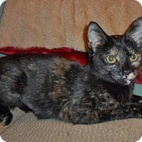 Adopt A Pet :: Laurel - Whitehall, PA