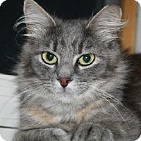 Adopt A Pet :: Lauren - Jenkintown, PA