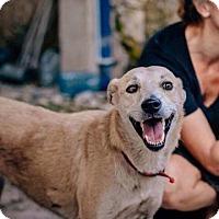 Adopt A Pet :: Yana - Toronto, ON