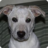 Adopt A Pet :: Bella - PENDING - kennebunkport, ME