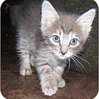 Adopt A Pet :: Mystery - Dallas, TX