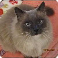 Adopt A Pet :: Ali - Los Angeles, CA