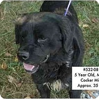 Adopt A Pet :: # 532-08 - RESCUED! - Zanesville, OH