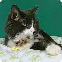 Adopt A Pet :: Elizabeth - Lakewood, CO