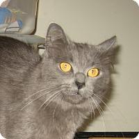 Adopt A Pet :: NEBEL - 2014 - Hamilton, NJ