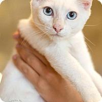 Adopt A Pet :: Willa - Atlanta, GA