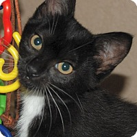 Adopt A Pet :: Daphne - The Colony, TX