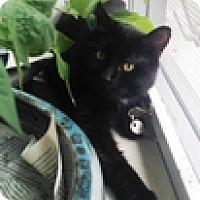 Adopt A Pet :: JJ - Vancouver, BC