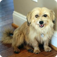 Adopt A Pet :: Penny - Atlanta, GA