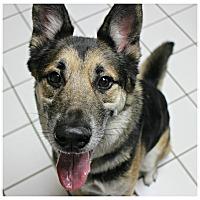 Adopt A Pet :: Windsor - Forked River, NJ