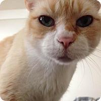 Adopt A Pet :: Tigger - San Francisco, CA
