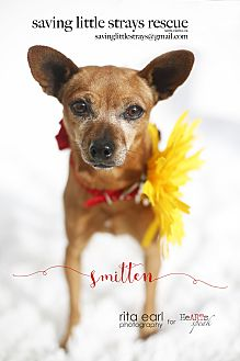 Chihuahua Mix Dog for adoption in Aqua Dulce, California - Leia