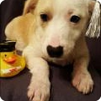 Adopt A Pet :: Tucker - Newark, DE