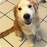 Adopt A Pet :: Jagger - BIRMINGHAM, AL