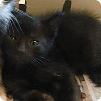 Adopt A Pet :: Jellybean - Whitestone, NY