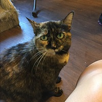 Adopt A Pet :: Jazzy - Walnut Creek, CA