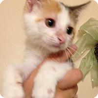 Adopt A Pet :: Ashley - San Antonio, TX
