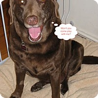 Adopt A Pet :: Gwen - San Francisco, CA