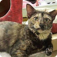 Adopt A Pet :: Terra - Harleysville, PA