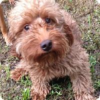 Adopt A Pet :: Bruce - Trenton, NJ
